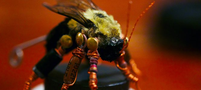 Bee Taxidermy for Beginners Workshop w/ Ruth Marsh